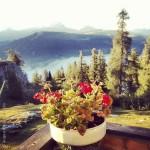 Good morning from rif. Gardenaccia